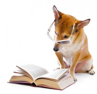 dog reading